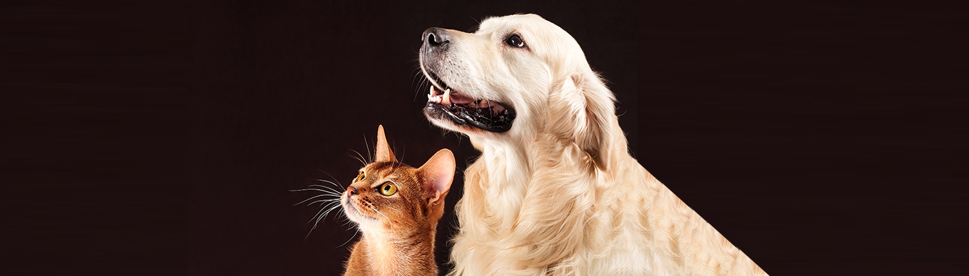 Petcare_Banner